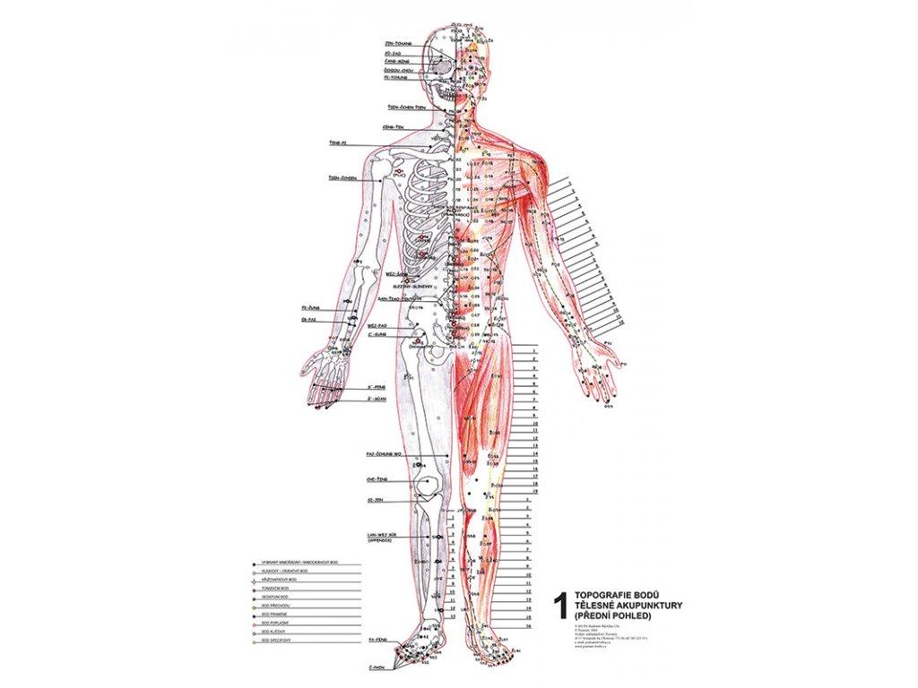 Anatomicke Mapy Topografie Aku Bodu Tejpy Cz