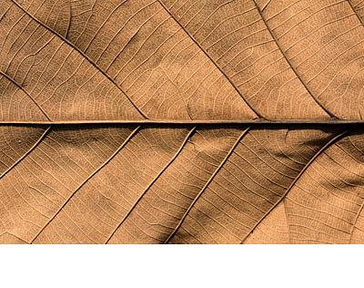 tabak_drevo_santalove_drevo