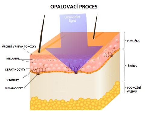 opalovaci-proces-s