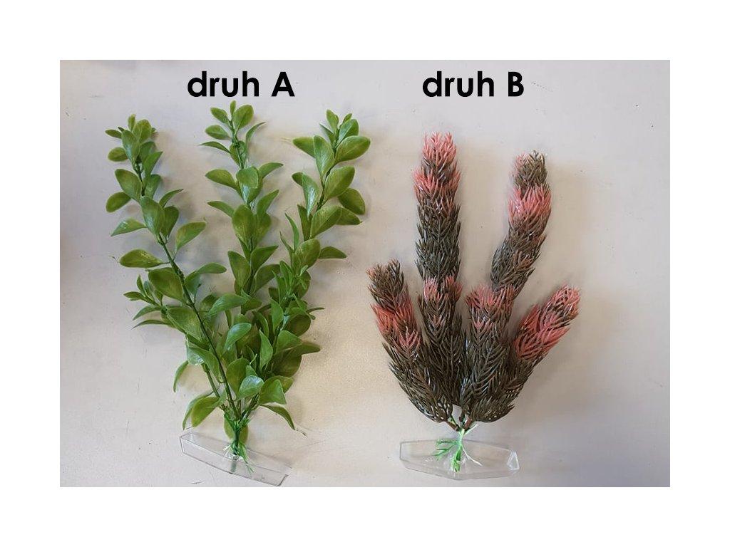 Akva rostlina velká 18-21cm (1ks)