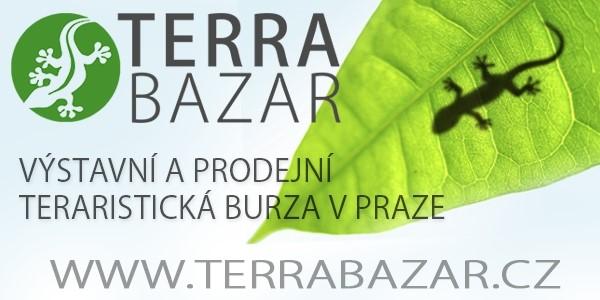 Terra bazar