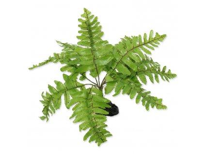 Rostlina REPTI PLANET kapradí Nephrolepis 20 cm (1ks)