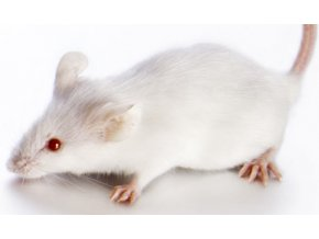 white mouse 001