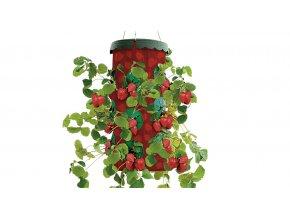 Plantino 2 + 2 - jahody
