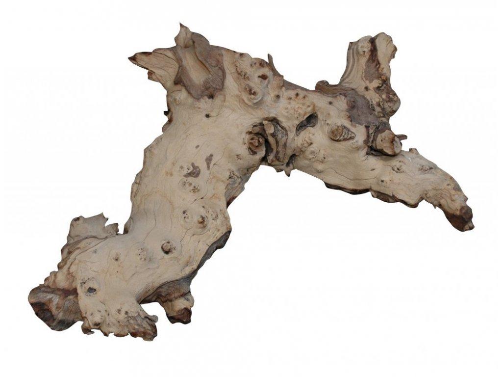 dekorace do terária kořen Mopani