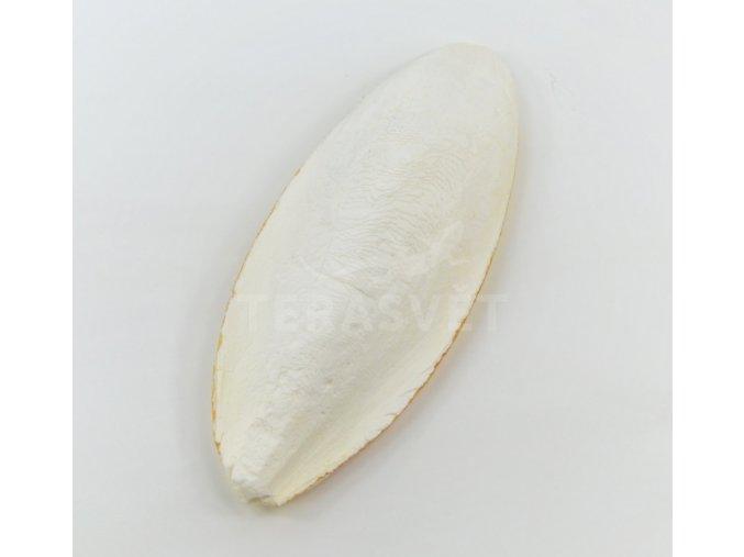 sepiovka