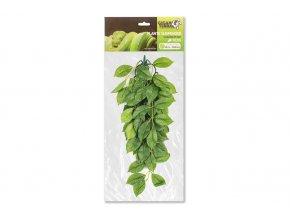GiganTerra Závěsná rostlina Ficus 45 cm (1)