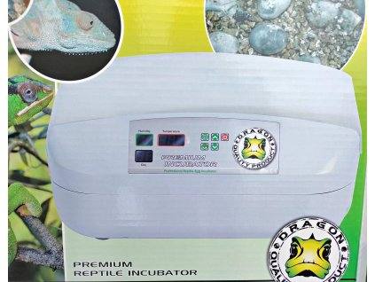 inkubator dragon 1