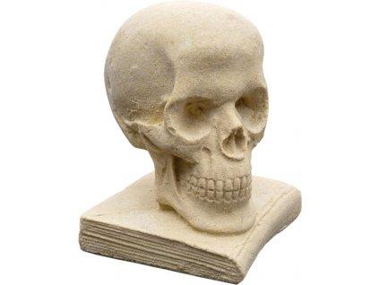lebka střední (na knize)