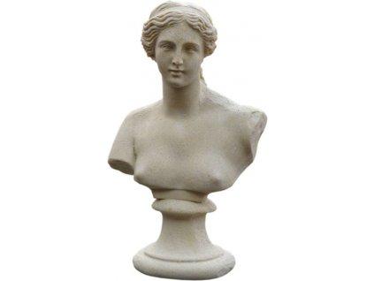 Venuše - torzo