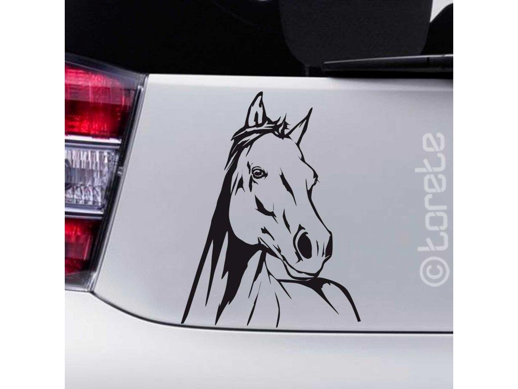 kone hlava