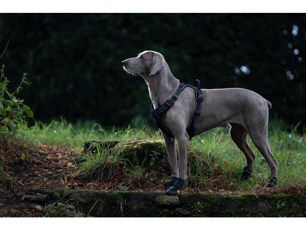 Postroj pro psa Truelove - černý