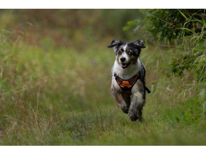 Postroj pro psa Truelove - oranžový