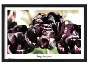Rámeček natura černý 40x60