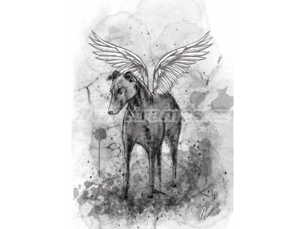 Obrázek Anděl naděje