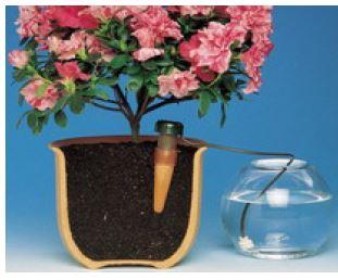 Zavlažování pokojových rostlin - vše co potřebujete vědět