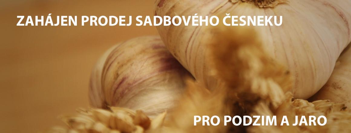 Zahájen prodej sadbového česneku