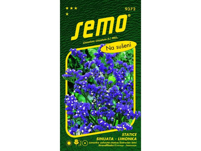 Statice limonka Blue
