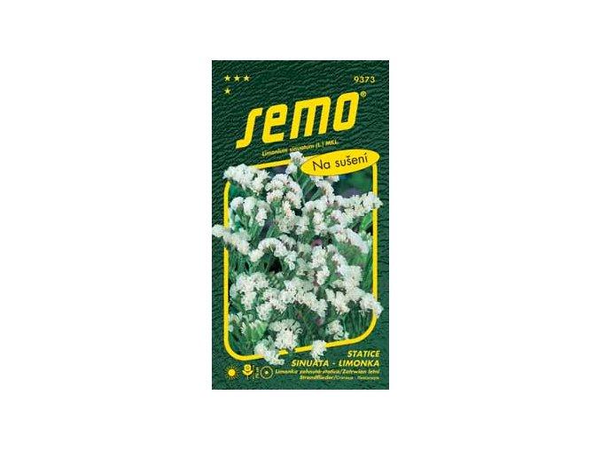 Statice limonka White bílá