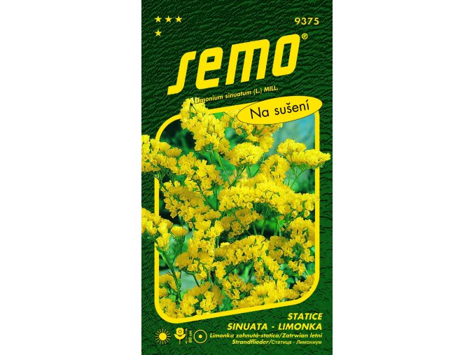 Statice limonka Yellow