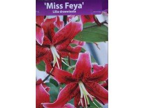 Lilie dřevitá Miss Freya