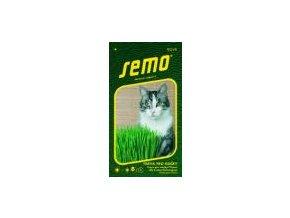 Tráva pro kočky