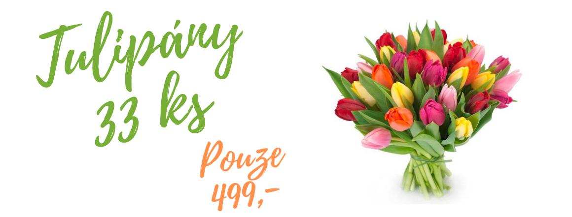 33 barevných tulipánů