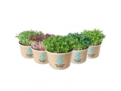 Grow Kit  - sada pro pěstování microgreens