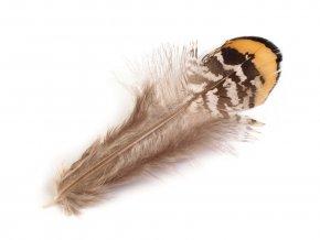 Bažantí peří délka 4,5-8,5 cm