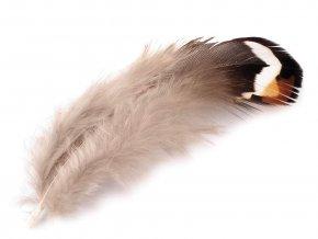 Bažantí peří délka 5,5-12 cm