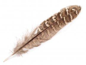 Bažantí peří délka 10-18 cm