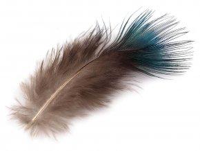Paví peří délka 5-8 cm