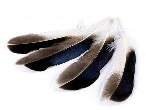 Kachní peří délka 10-14 cm