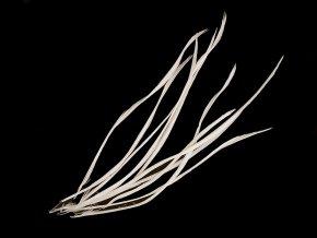 Husí peří - osten / brka délka 15-23 cm