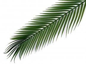 Umělý list palmy