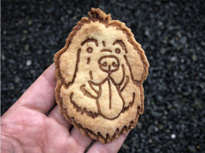 novofundlandský pes 11