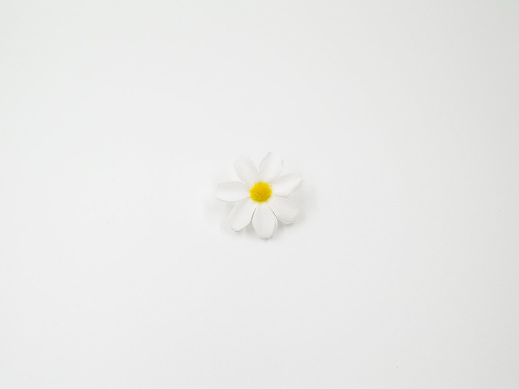 Kopretina 001 bílá