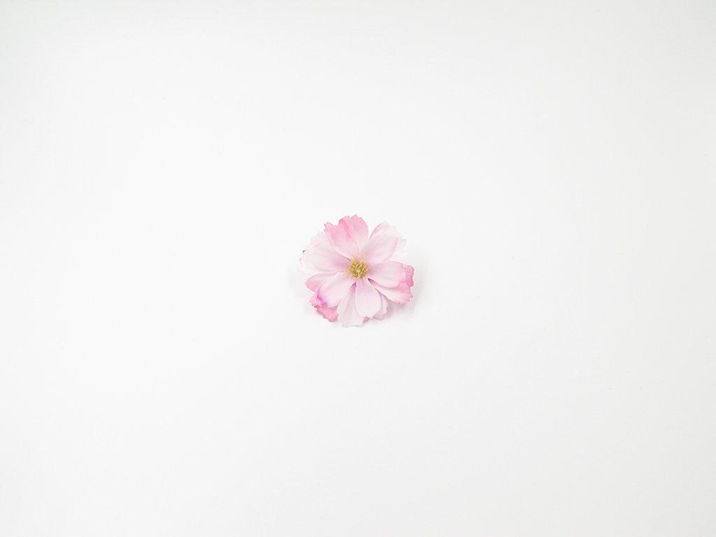 Čekanka 002 bílo růžová