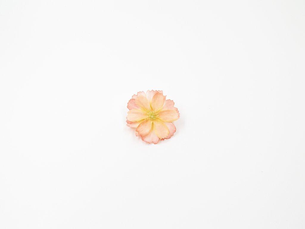 Čekanka 002 růžovo broskvová