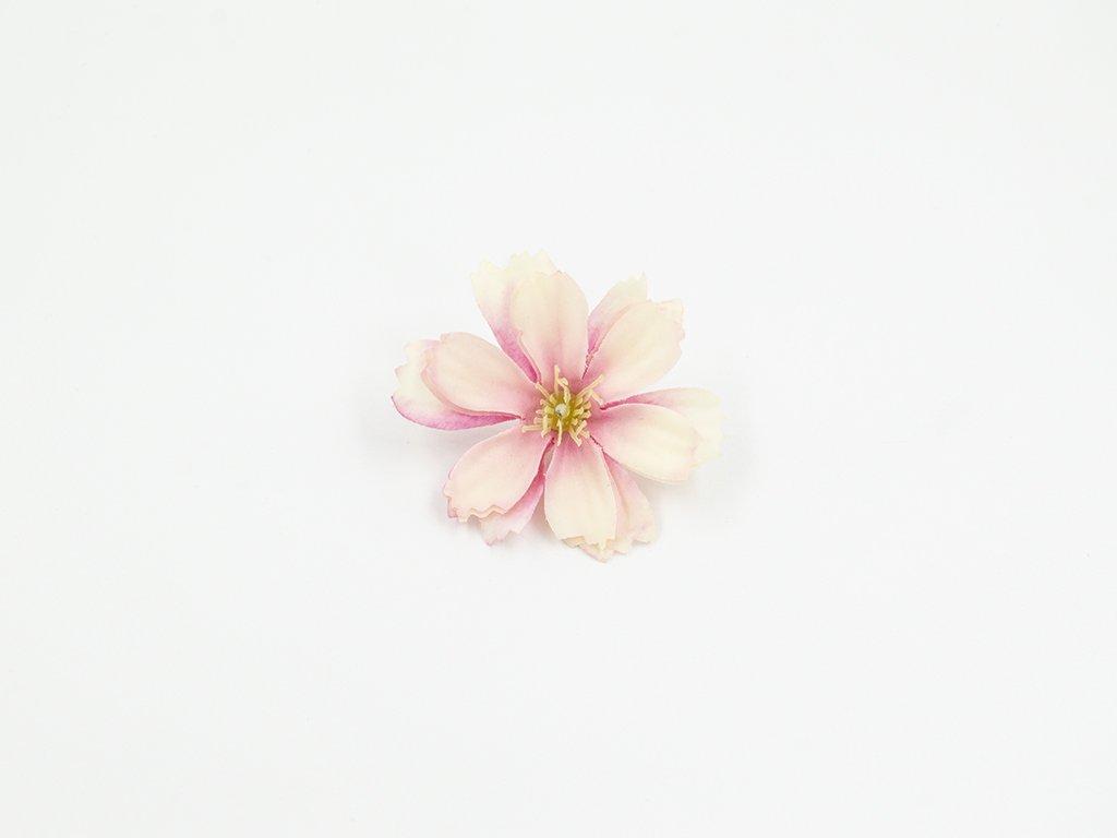 Čekanka 002 růžovo meruňková