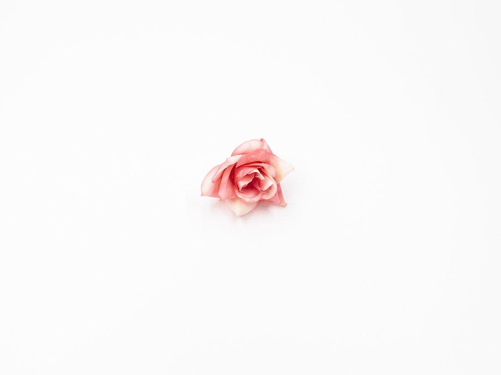 Růže 007 růžovo bílá
