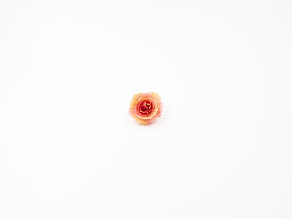 Růže 005 oranžová