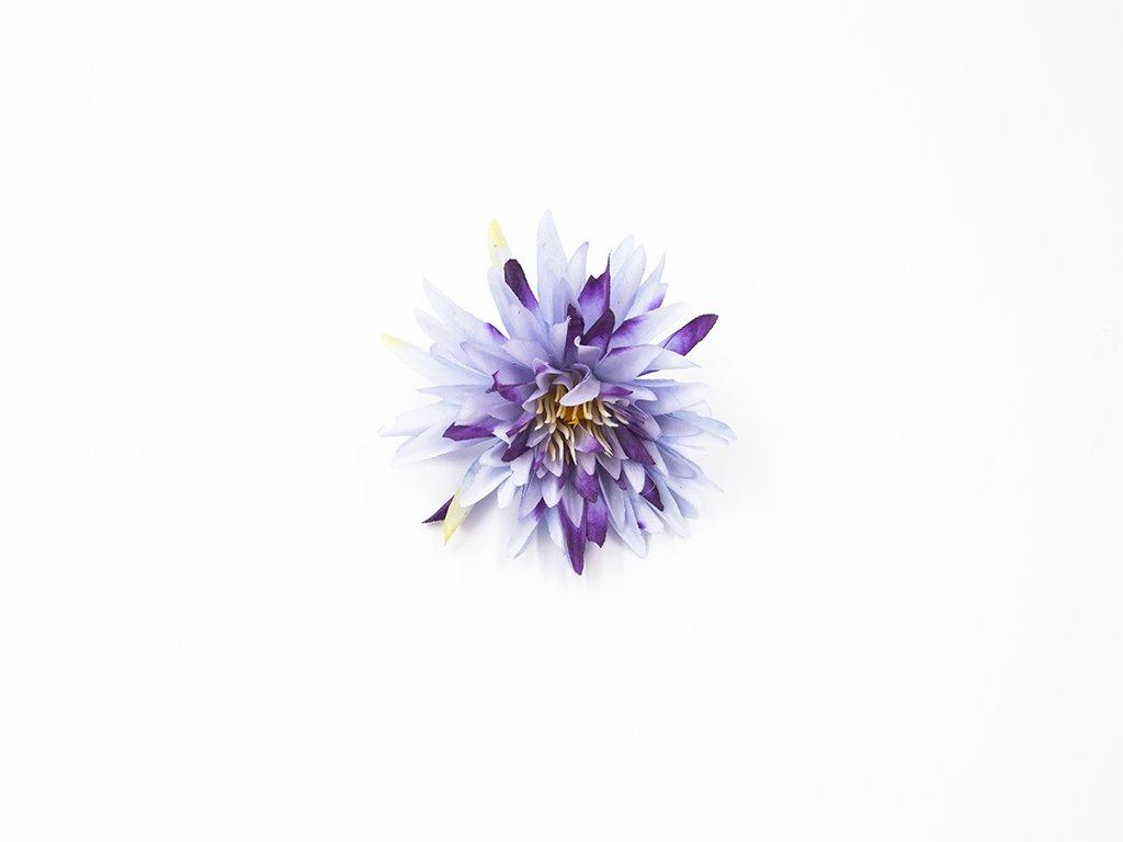 Chryzantéma 003 fialová