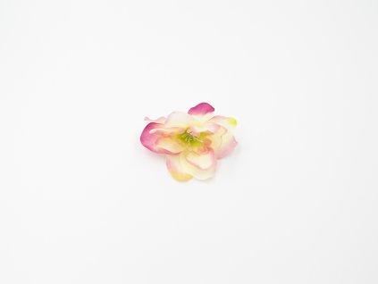 Kamélie 002 růžovo meruňková