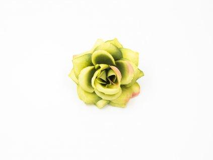 Růže 020 zelená