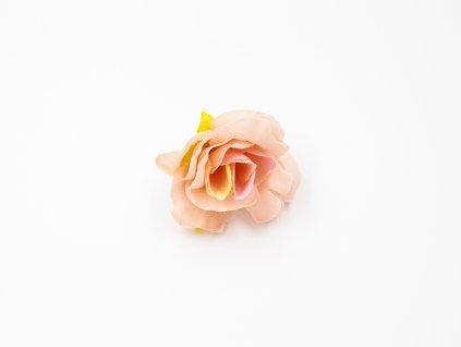 Růže 016 broskvová