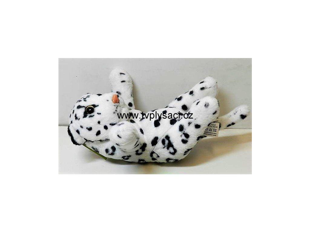 DFDCB748 1497 45B5 A0A2 81626084EAEA leopard bily plys b600203 2