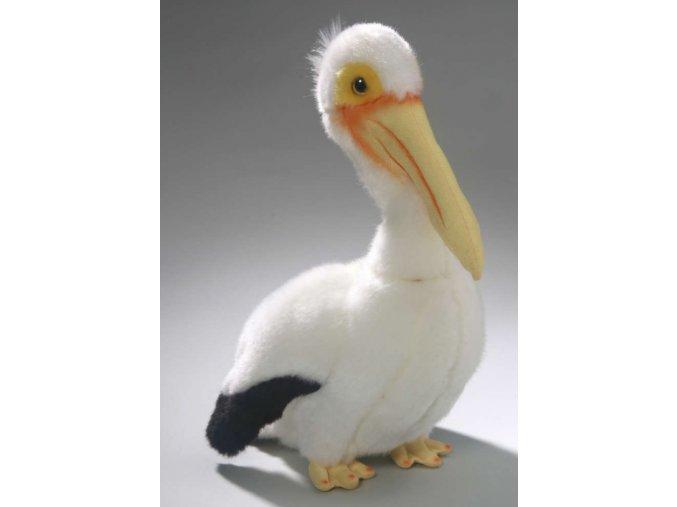 pelikán3