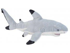 žralok6