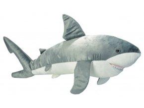 žralok7